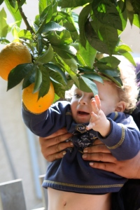 Picking Oranges