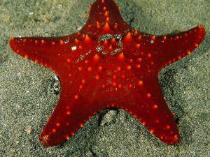 star-fish_723_600x450